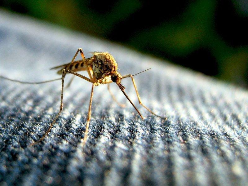 Malaria problem