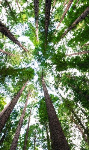 Save 500 million Trees per Year